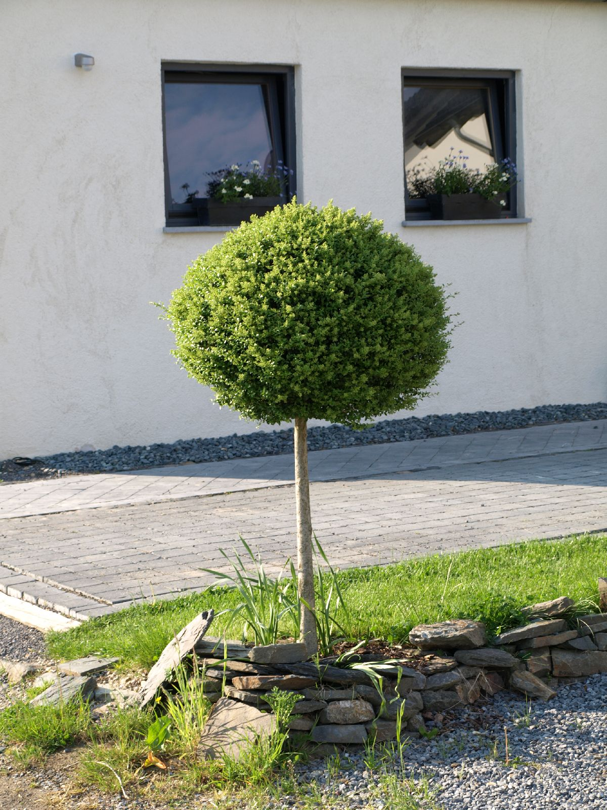 Pflanzen-Baum-Foto_Textur_B_P5142793