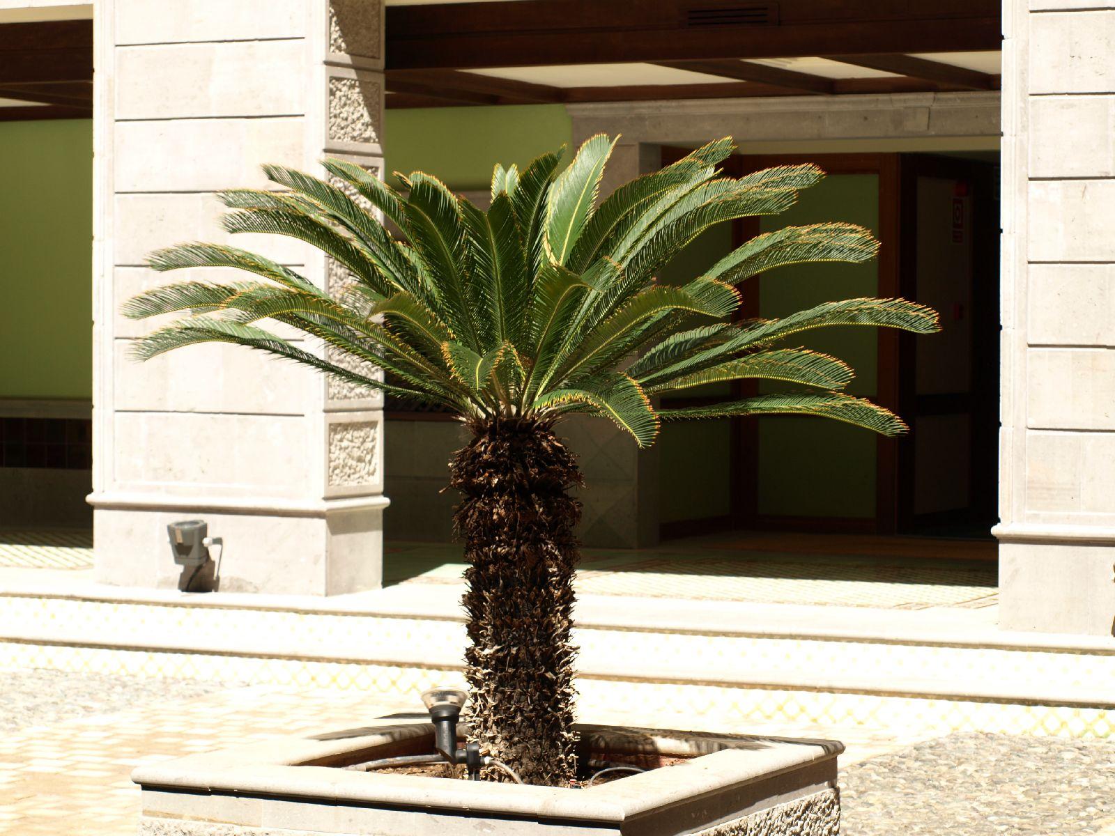 Pflanzen-Baum-Foto_Textur_B_P5234757