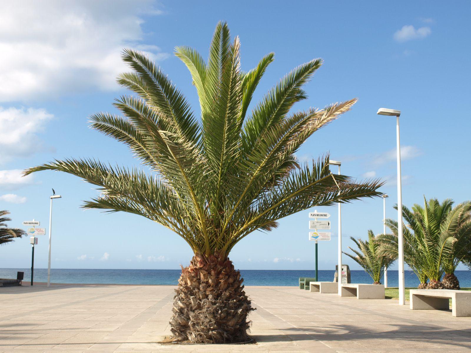 Pflanzen-Baum-Foto_Textur_B_P5265038