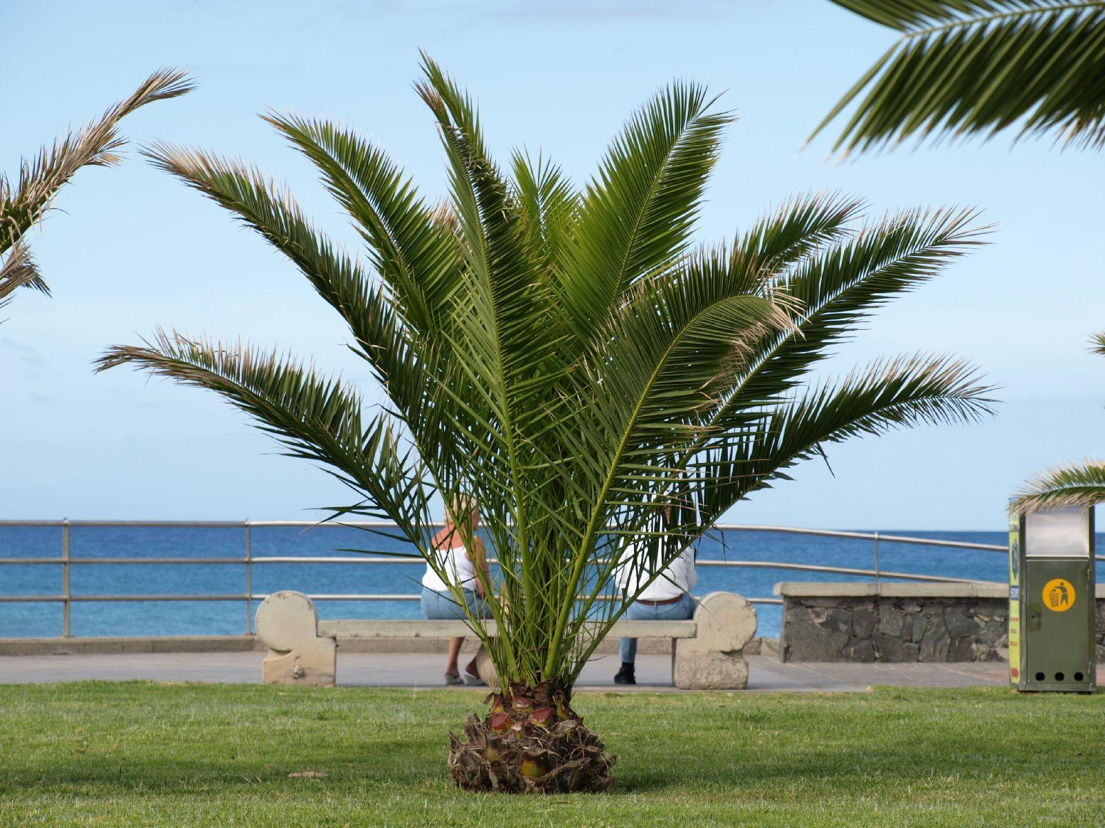 Pflanzen-Baum-Foto_Textur_B_P5265040