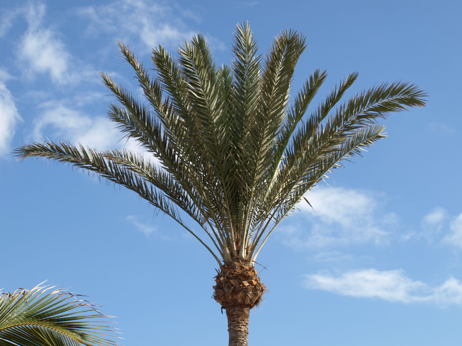 Pflanzen-Baum-Foto_Textur_B_P5265051