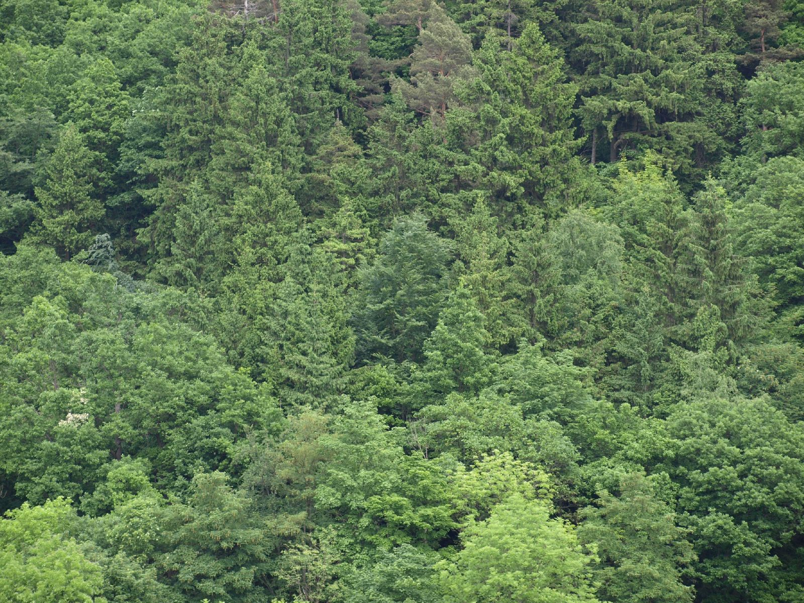 Pflanzen-Baum-Foto_Textur_B_P6036442