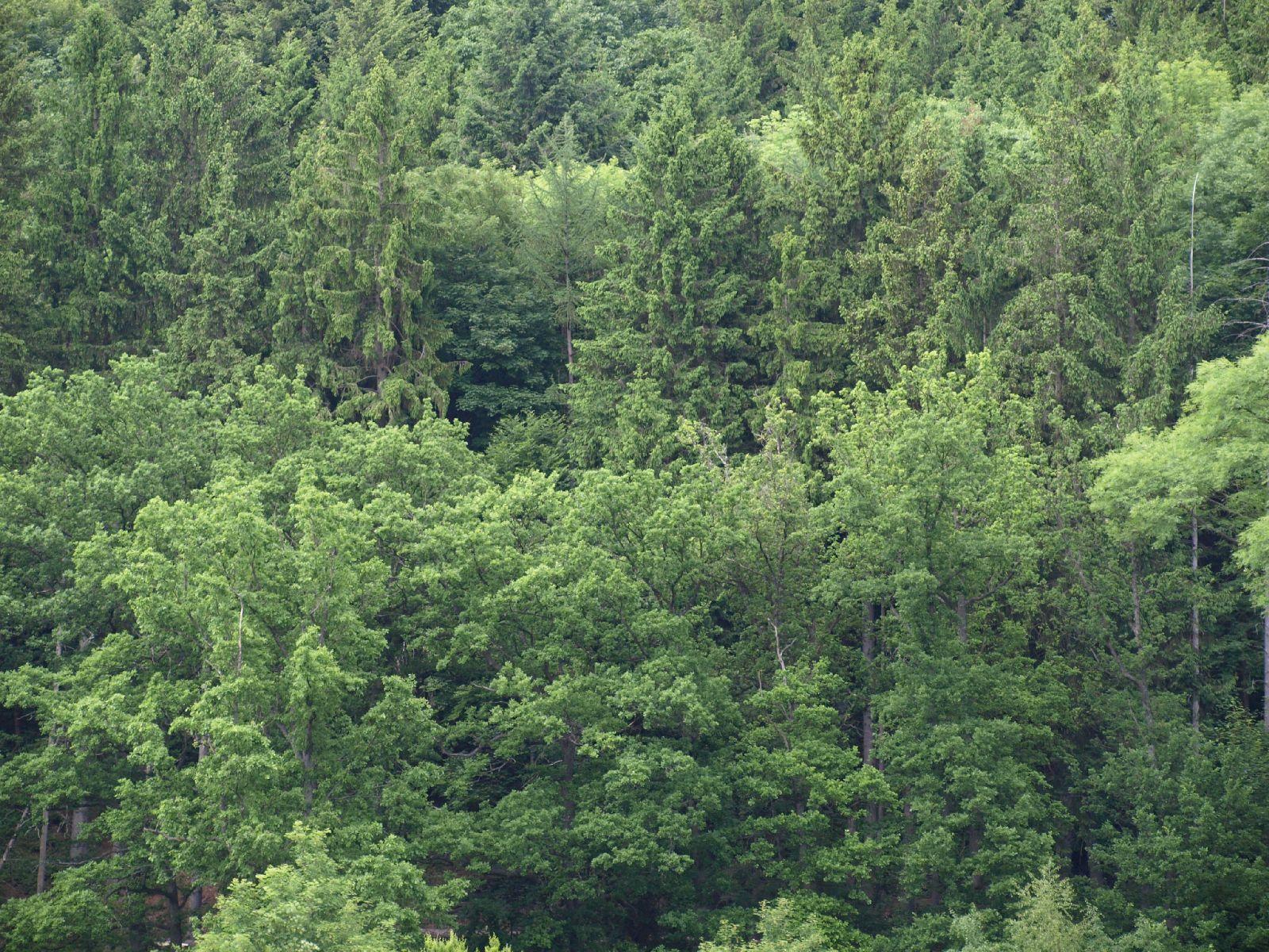 Pflanzen-Baum-Foto_Textur_B_P6036443