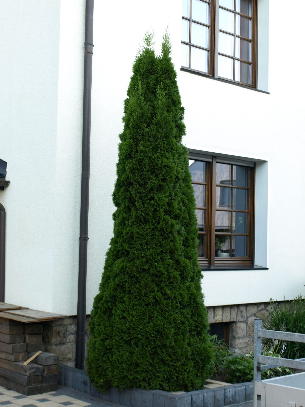 Pflanzen-Baum-Foto_Textur_B_P7023872