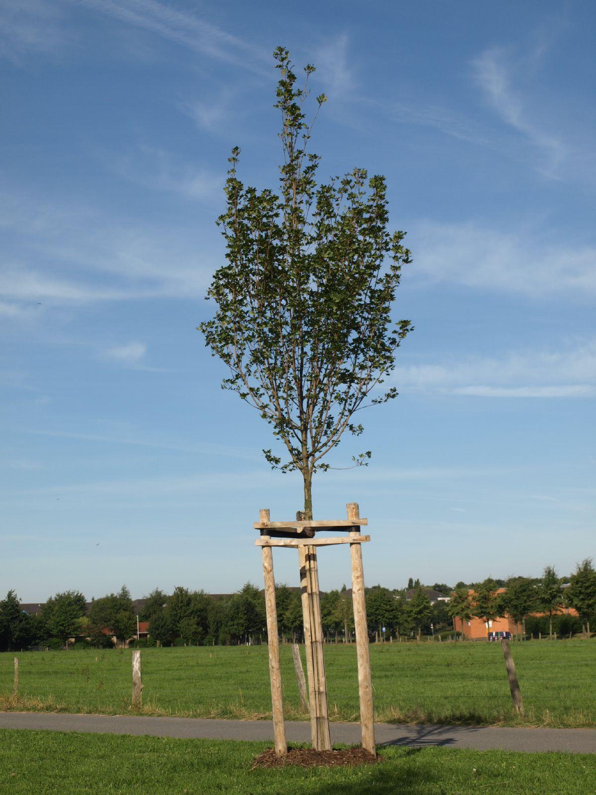 Pflanzen-Baum-Foto_Textur_B_P7268812