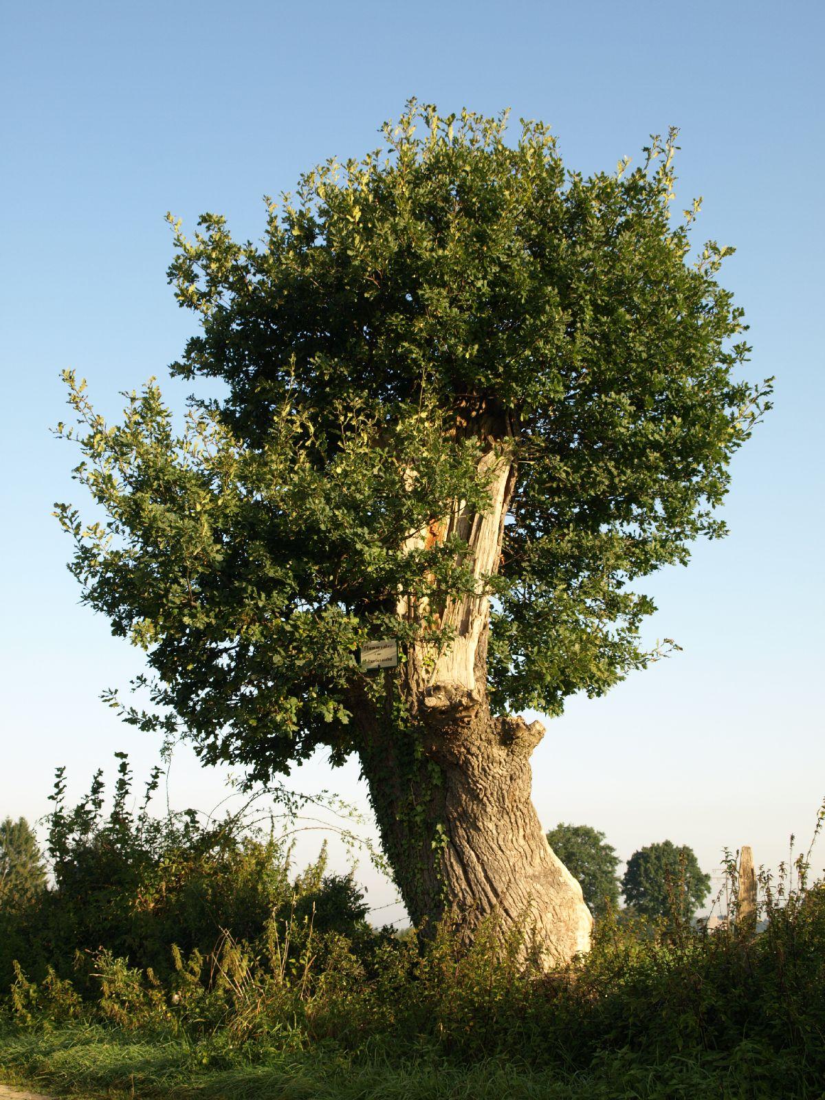Pflanzen-Baum-Foto_Textur_B_P9205192