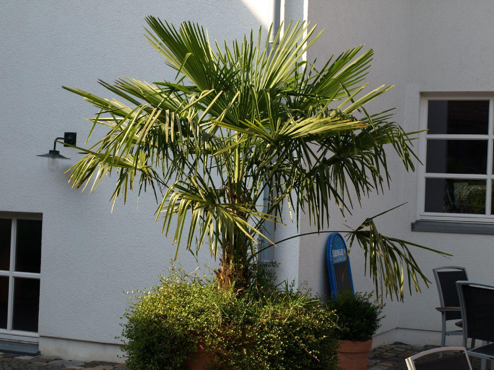 Pflanzen-Baum-Foto_Textur_B_P9205290
