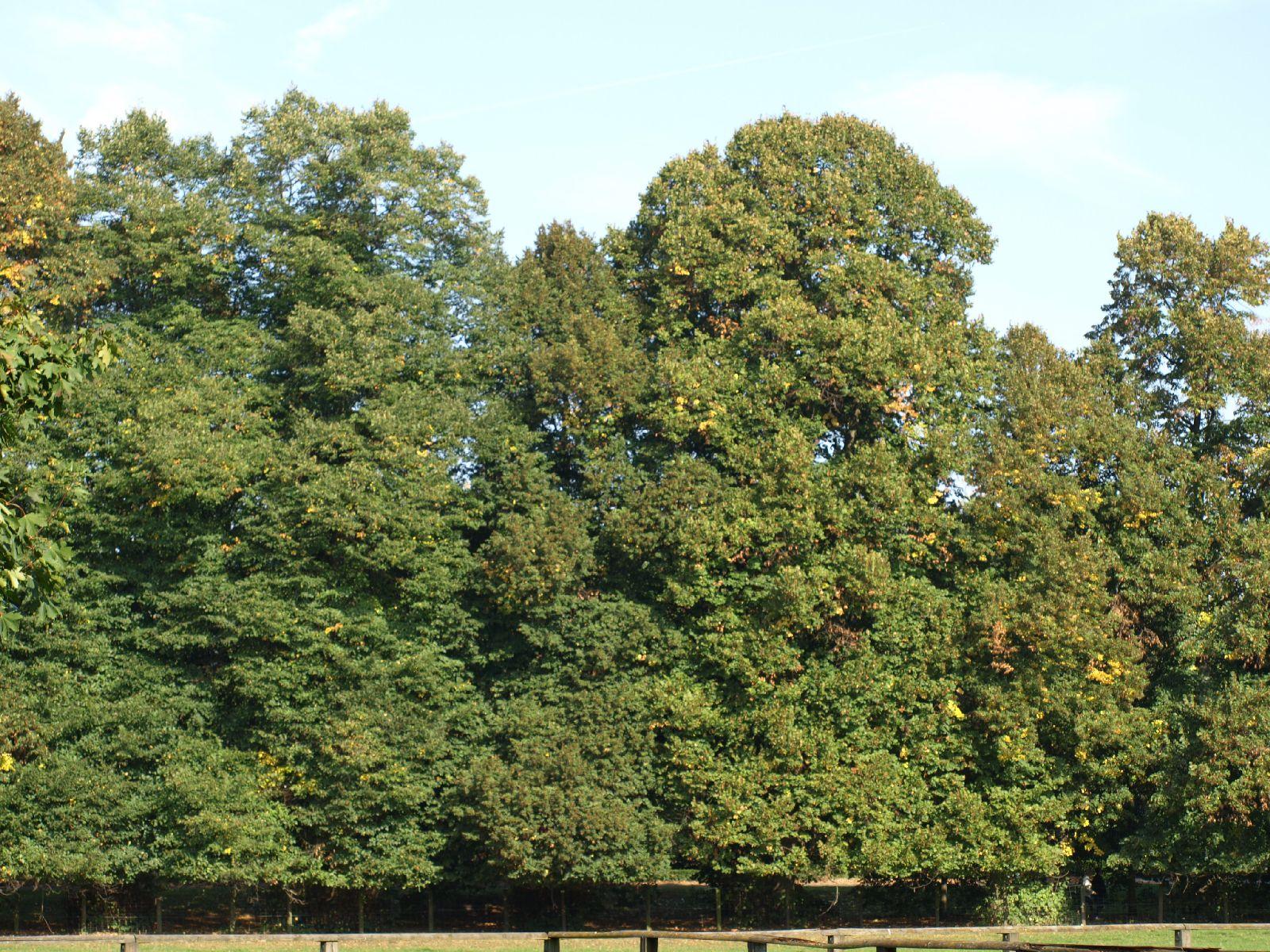 Pflanzen-Baum-Foto_Textur_B_P9279879