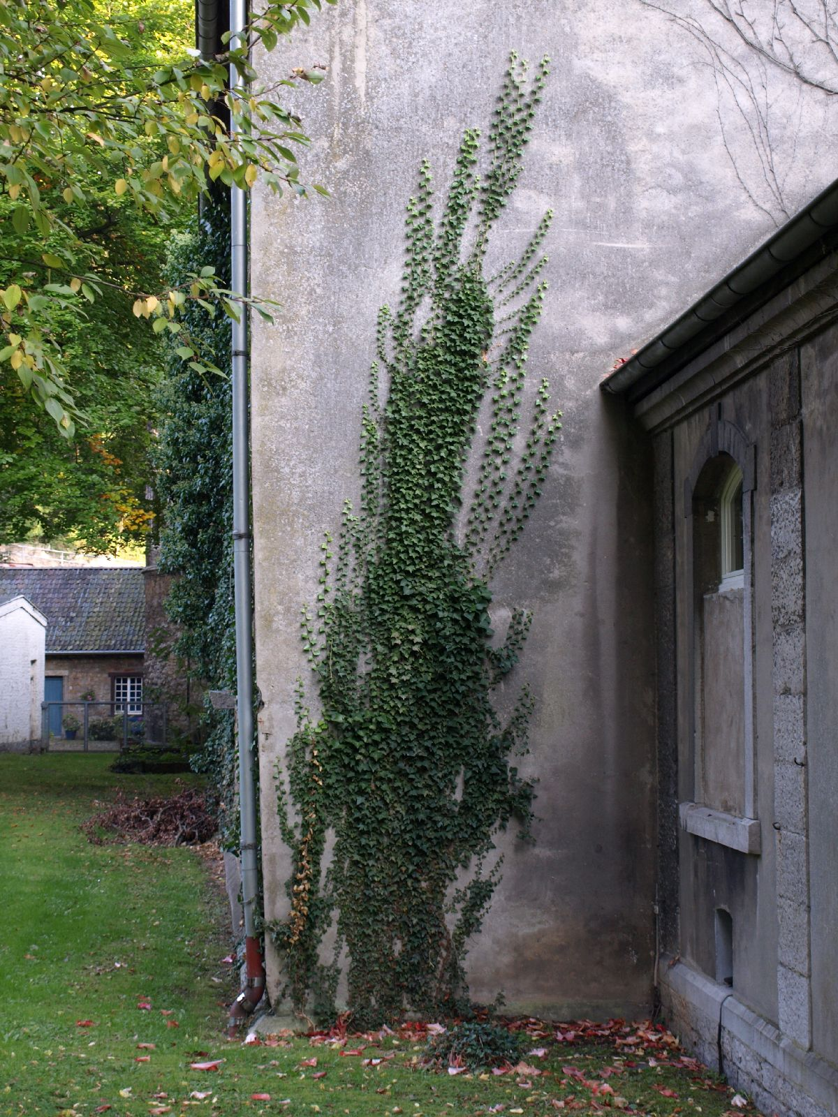 Pflanzen-Baum-Foto_Textur_B_P9285575