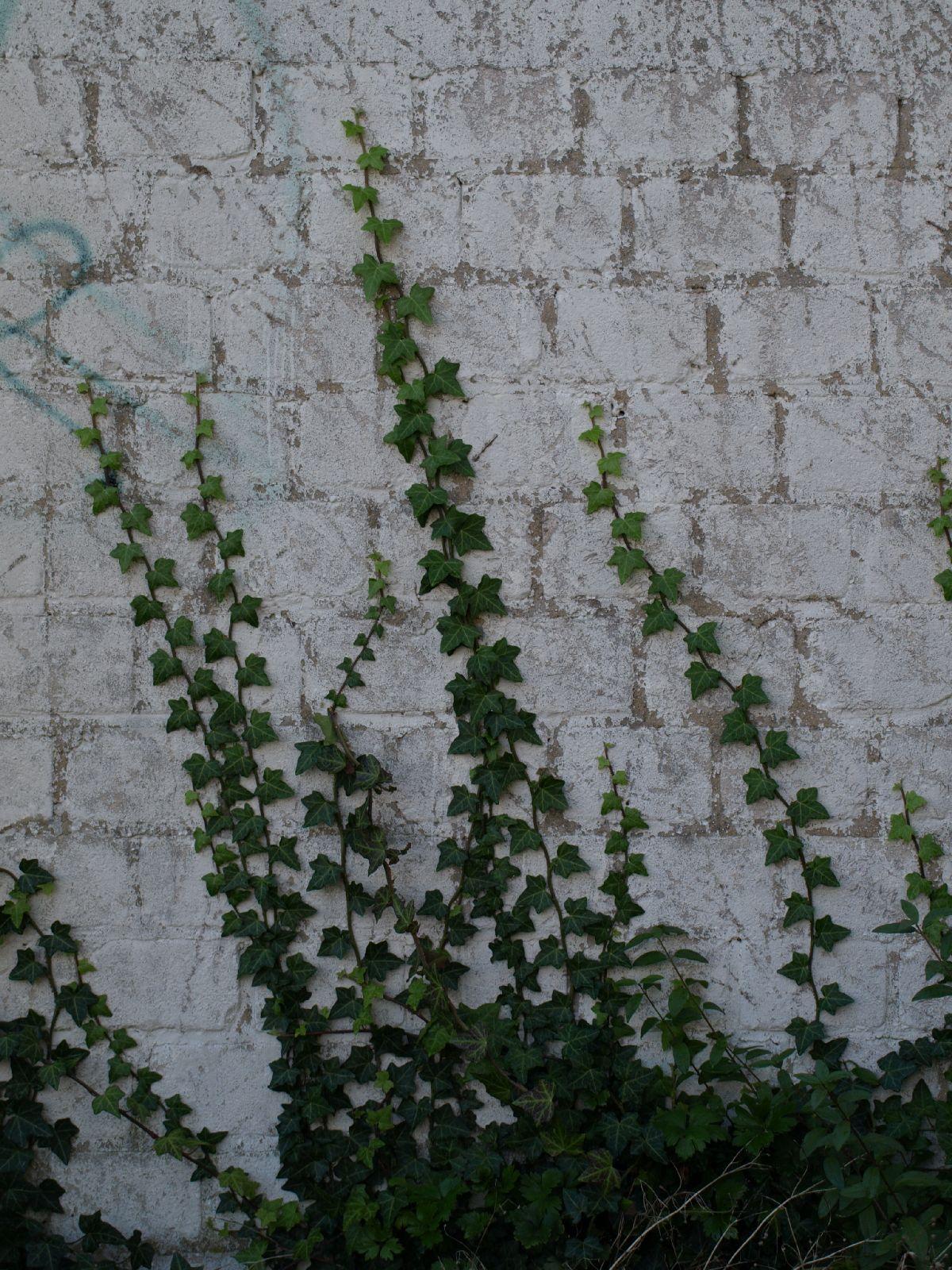 Pflanzen-Baum-Foto_Textur_B_PA035668