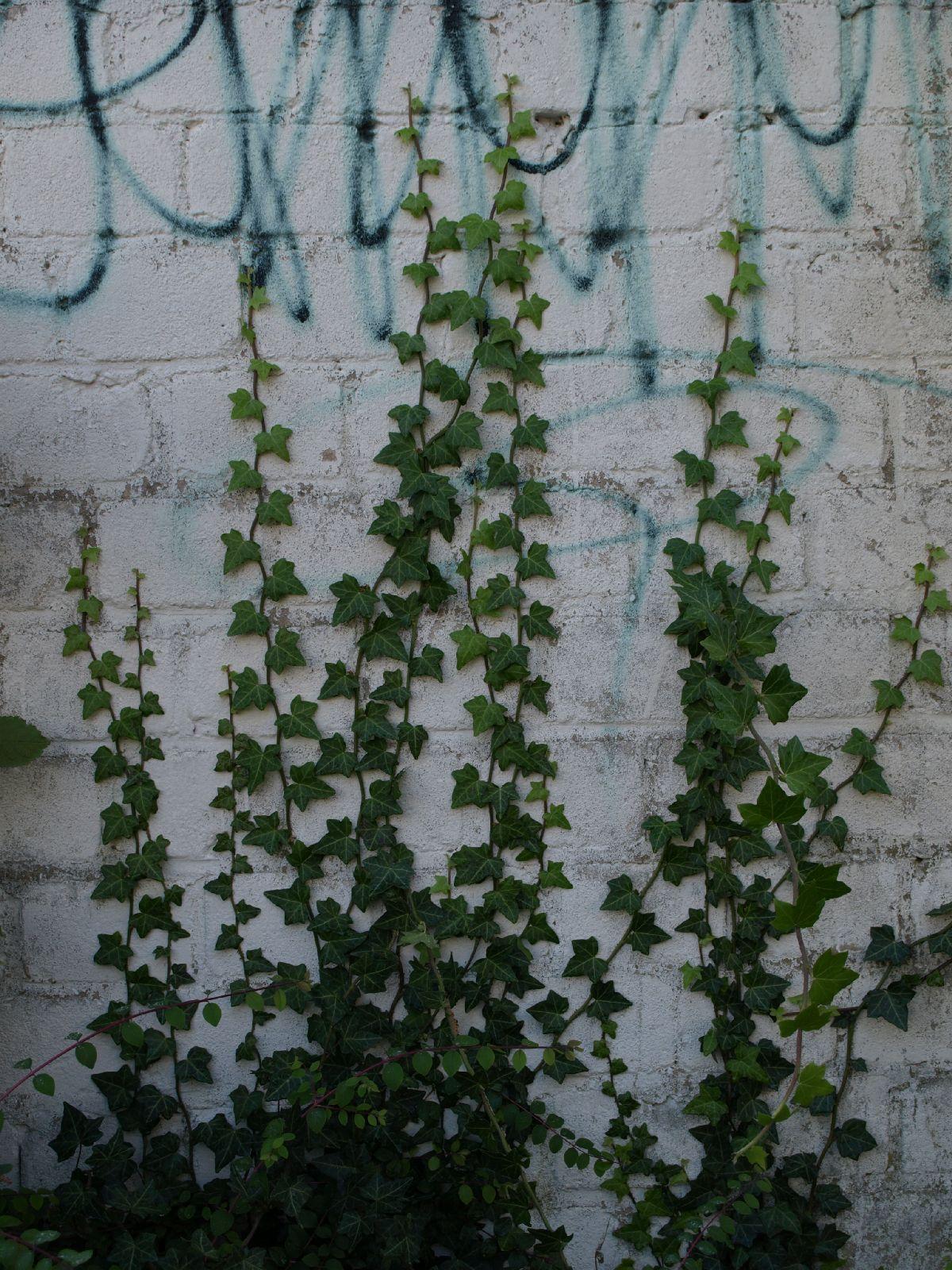Pflanzen-Baum-Foto_Textur_B_PA035669