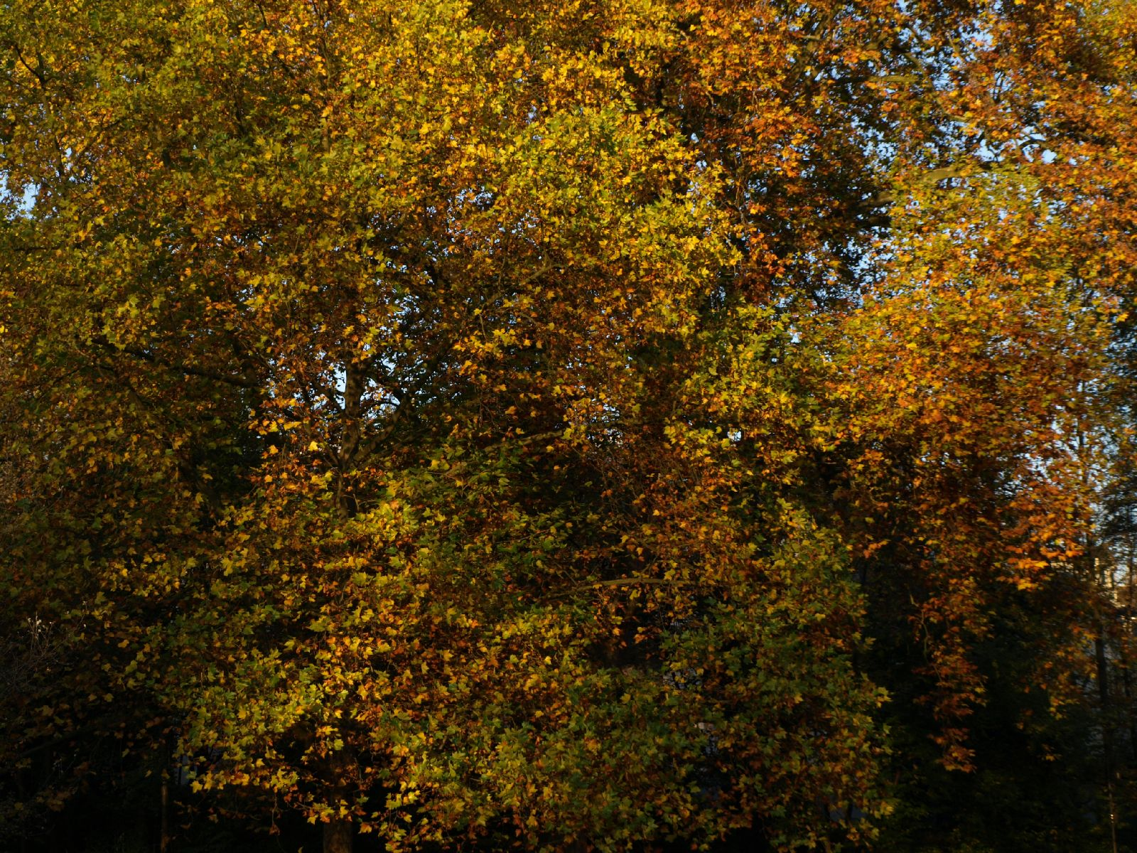 Pflanzen-Baum-Foto_Textur_B_PA256302