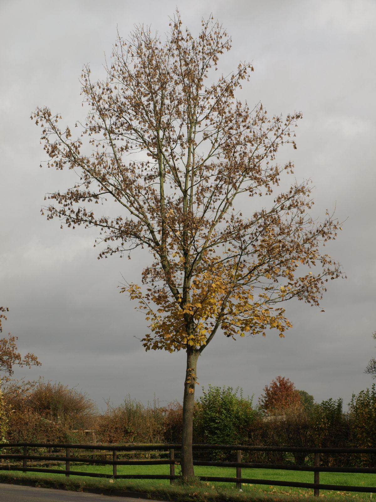 Pflanzen-Baum-Foto_Textur_B_PA260548