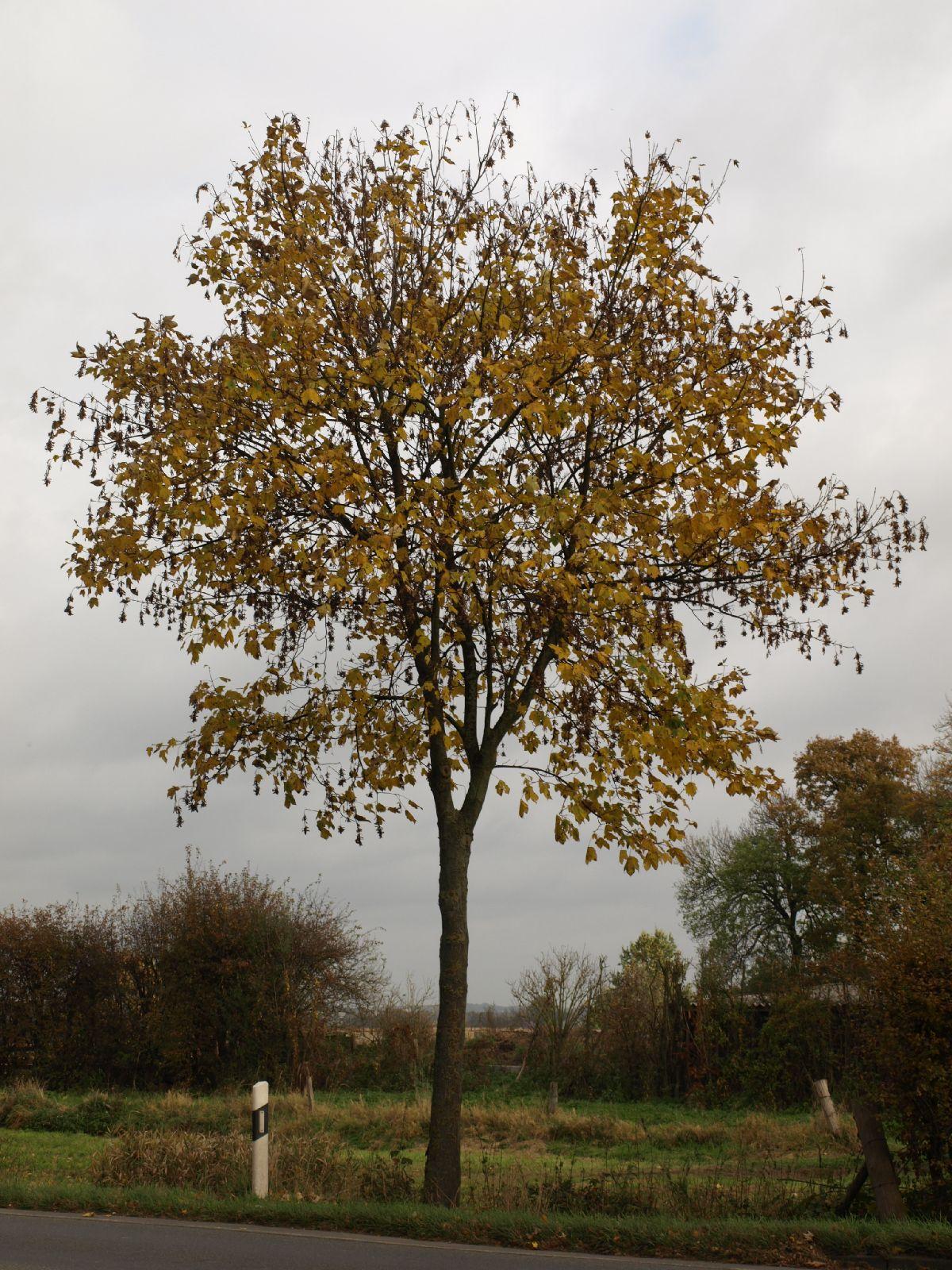 Pflanzen-Baum-Foto_Textur_B_PA260549