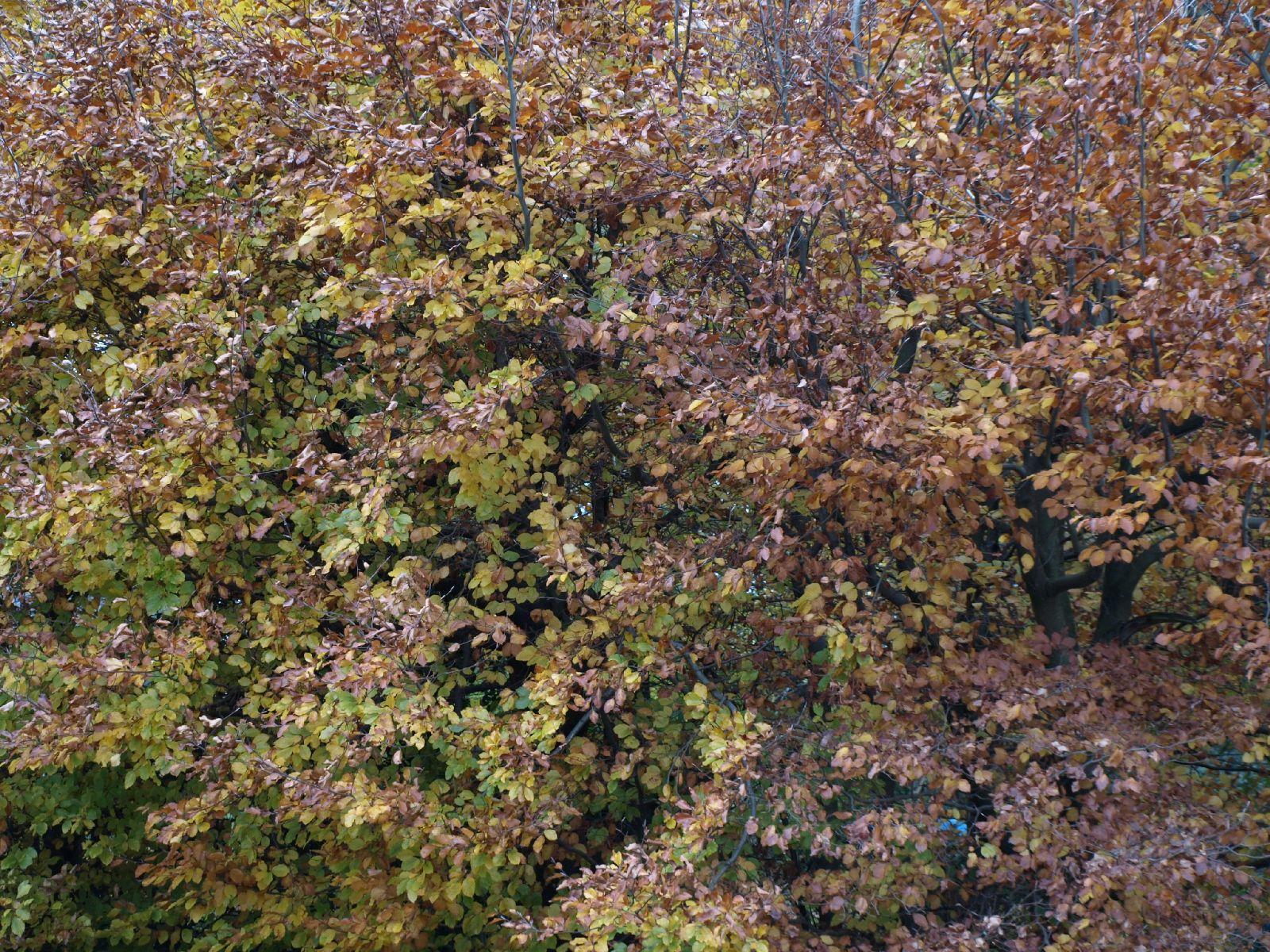 Pflanzen-Baum-Foto_Textur_B_PB026432