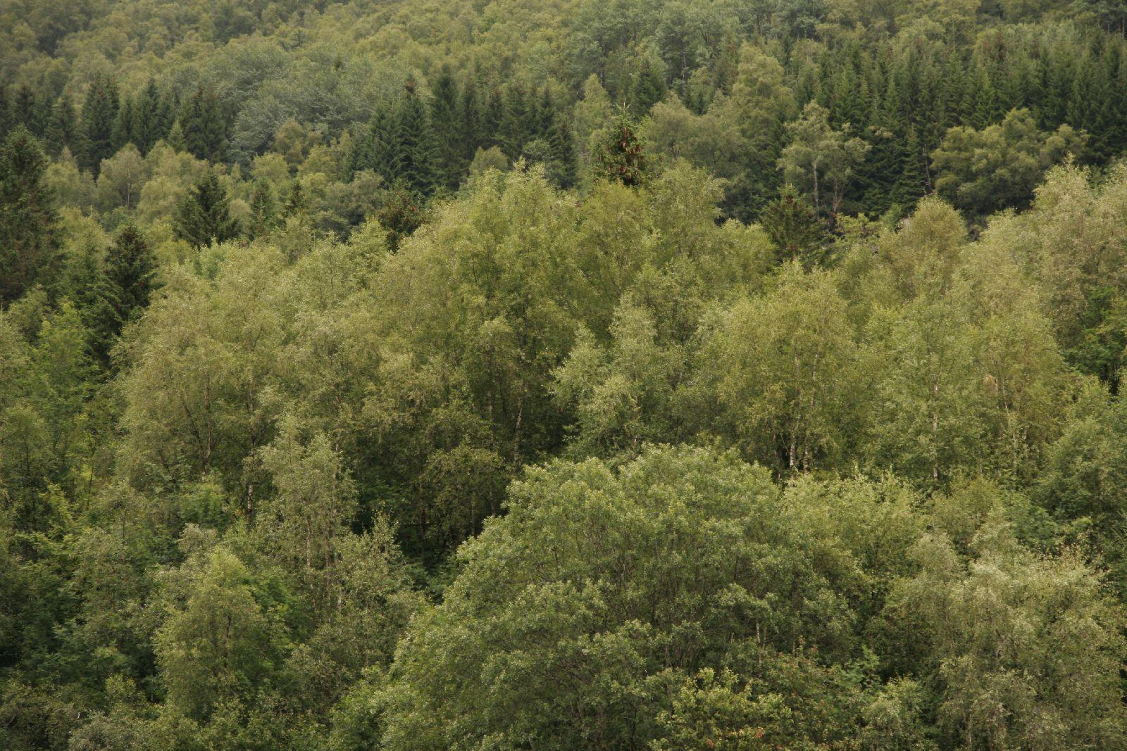 Pflanzen-Baum-Foto_Textur_B__MG_2616