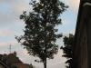 Pflanzen-Baum-Foto_Textur_B_01680