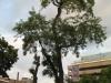 Pflanzen-Baum-Foto_Textur_B_01690