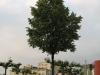 Pflanzen-Baum-Foto_Textur_B_01730