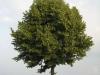 Pflanzen-Baum-Foto_Textur_B_03240