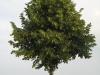 Pflanzen-Baum-Foto_Textur_B_03260