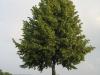 Pflanzen-Baum-Foto_Textur_B_03280