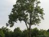 Pflanzen-Baum-Foto_Textur_B_03340