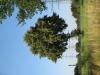 Pflanzen-Baum-Foto_Textur_B_1170
