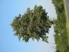 Pflanzen-Baum-Foto_Textur_B_1174
