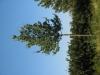 Pflanzen-Baum-Foto_Textur_B_1177