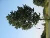 Pflanzen-Baum-Foto_Textur_B_1178