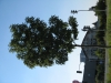 Pflanzen-Baum-Foto_Textur_B_1179