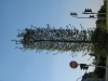 Pflanzen-Baum-Foto_Textur_B_1181