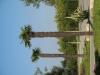 Pflanzen-Baum-Foto_Textur_B_1198