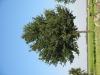 Pflanzen-Baum-Foto_Textur_B_1201