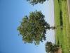 Pflanzen-Baum-Foto_Textur_B_1204