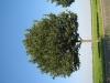 Pflanzen-Baum-Foto_Textur_B_1208