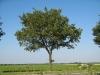Pflanzen-Baum-Foto_Textur_B_1212