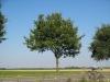 Pflanzen-Baum-Foto_Textur_B_1214