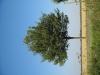 Pflanzen-Baum-Foto_Textur_B_1225