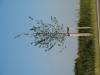Pflanzen-Baum-Foto_Textur_B_1250