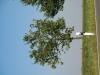 Pflanzen-Baum-Foto_Textur_B_1251