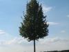 Pflanzen-Baum-Foto_Textur_B_26880