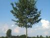 Pflanzen-Baum-Foto_Textur_B_26970