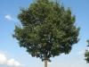 Pflanzen-Baum-Foto_Textur_B_26980