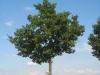 Pflanzen-Baum-Foto_Textur_B_27000