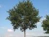Pflanzen-Baum-Foto_Textur_B_27110