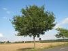 Pflanzen-Baum-Foto_Textur_B_27120