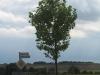 Pflanzen-Baum-Foto_Textur_B_2860