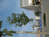 Pflanzen-Baum-Foto_Textur_B_3591